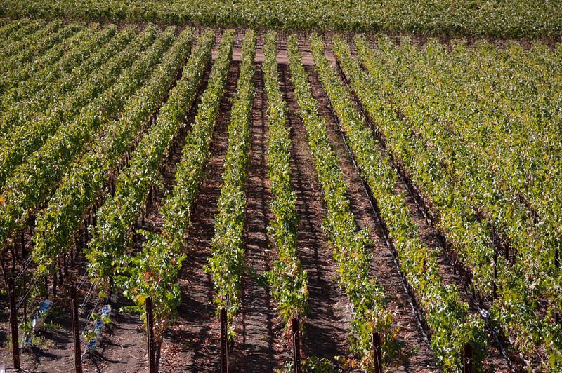 The vineyards at ZD Vineyards