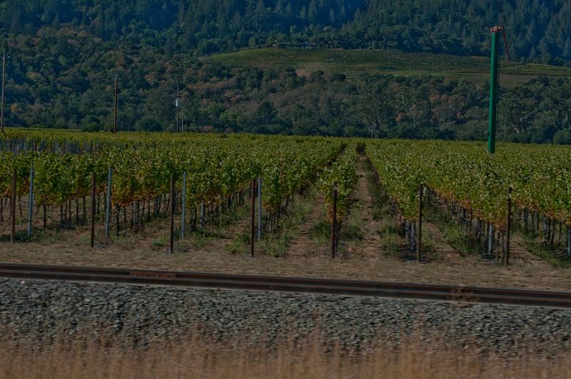Vinyards on the way to ZD Vineyards