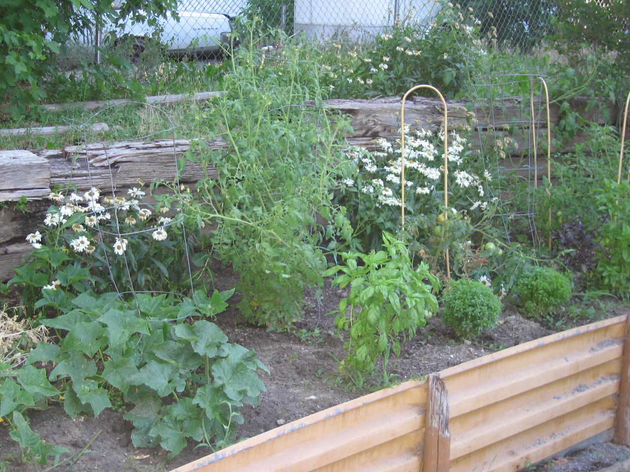 Quick shot of my garden.