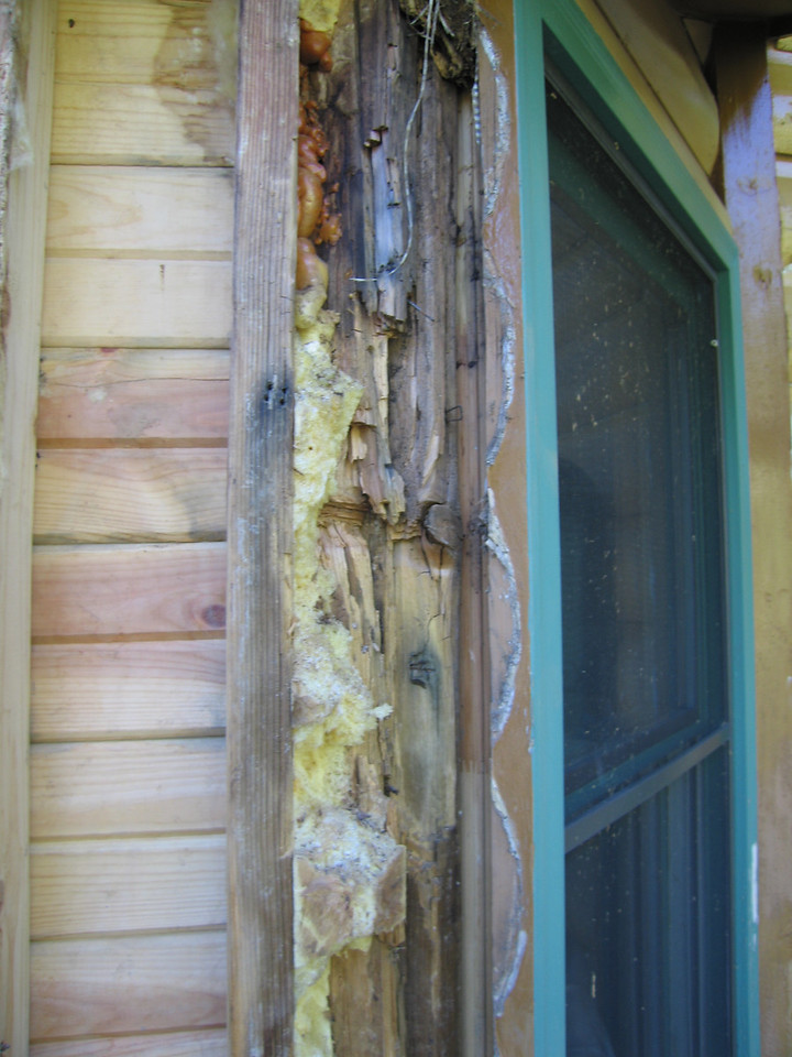 ...unfortunately there was severe water damage to the plywood sheathing and studs...