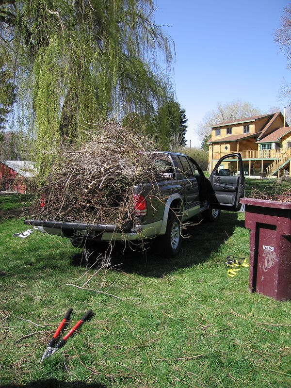 April 16, 2005 - Such a beautiful morning, I couldn't bring myself to start tiling.  I had a large pile of tree debris that needed to go to the dump...so decided to load it in the back of my pickup.