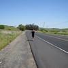 Raul ran from Sonoma into Petaluma