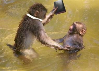 885_Monkey_Baptism