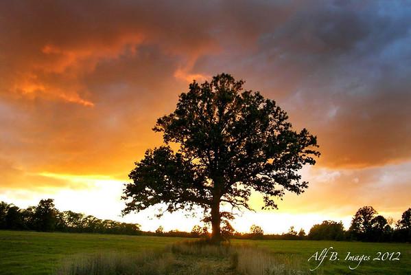 Sunset_behind_Niagara_Tree