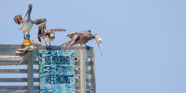 no mooring, no landing