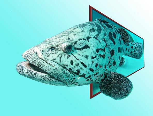 giant cod