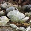 Rhea Rd: more pretty fungi