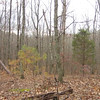 Rhea Rd: Panorama from the beautiful rolling middle of the property