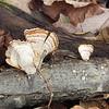Rhea Rd: fungus