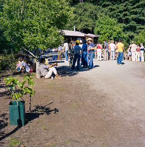 Spring party at Scurfield's Rhododendron Farm in Scotts Valley