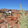 A primitive camp site and flower south of Moab Utah.