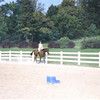 Stan was a lovely horse, although a little heavy on his forehand.