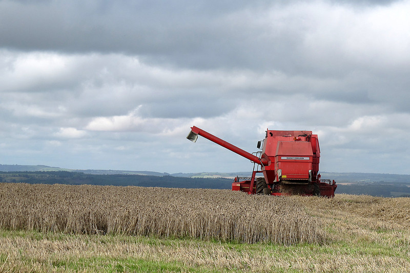 Harvest on the hills.<br /> <br /> The ridge near White Horse Hill.   Farmers Weekly reports that yields are higher than was feared during the spring drought.
