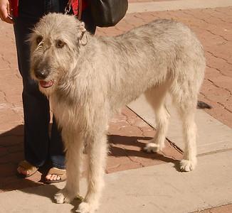 Rio Grande Dog Show 2010