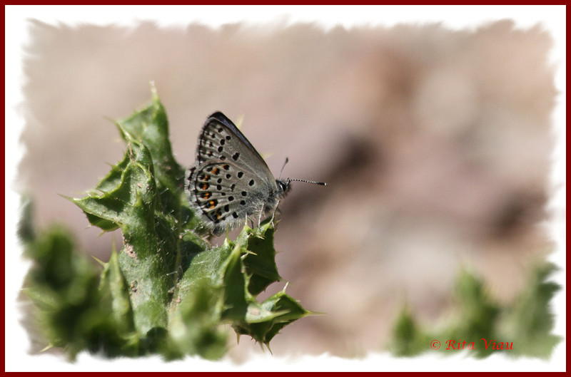 Northern Blue - July 1, 2012 - River Bourgeois