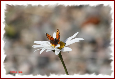 River Bourgeois Butterflies
