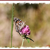 Painted Lady - July 1, 2012 - River Bourgeois