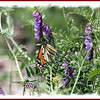 Monarch - June 30, 2012 - River Bourgeois