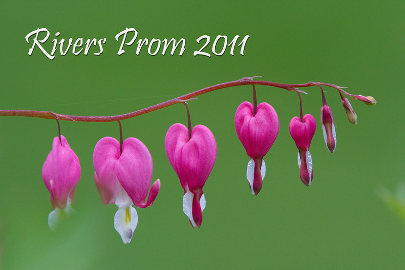 Rivers Prom 2011 - 0007
