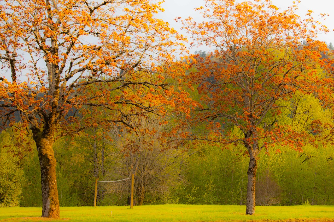 Rooster Rock Park east of Portland