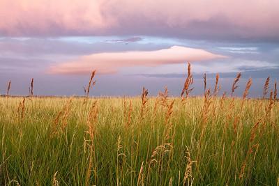Castagna_Grasslands