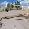 The sidewalk near the entrance shows the wind damage to the palm trees and the general disrepair.