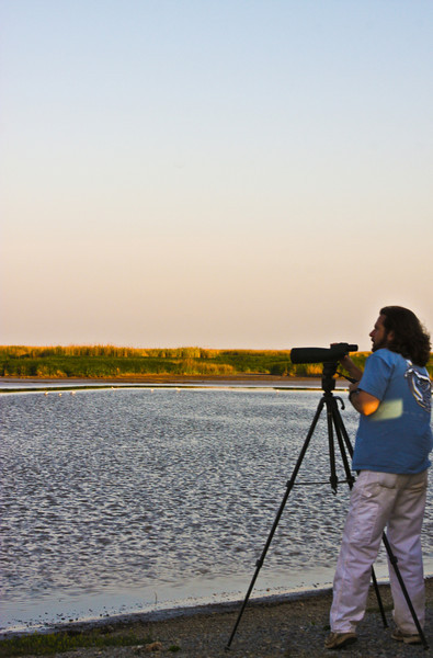 Gabrey spotting Avocets