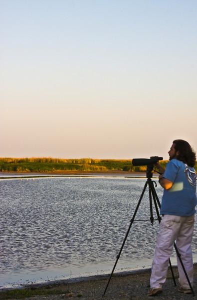 Gabrey spotting Avocets