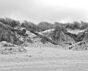 Dunes At Wingaersheek Beach - Gloucester, Mass.