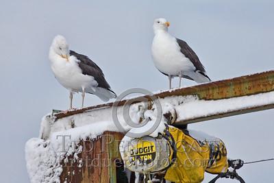 Seagulls on crane - Rockport, Massachusetts - 023