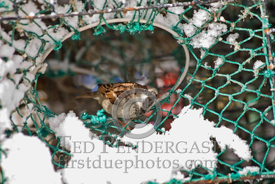 Bird in Lobster Trap - Rockport, Massachusetts - 261