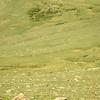 Six bull elk lounging in the summer sun