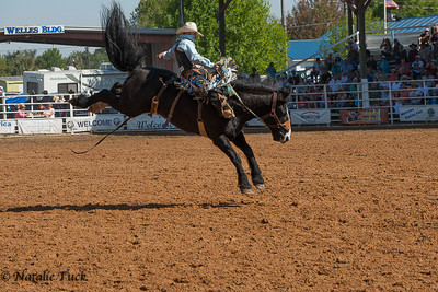 Rodeo Bucking Bronc's
