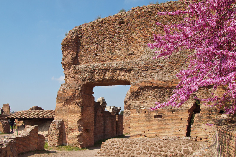 A little more Spring colour amongst the Roman ruins.
