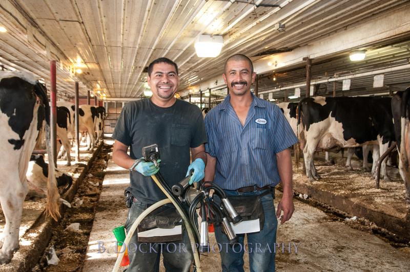 1209_Ronnybrook Farm Milking_024
