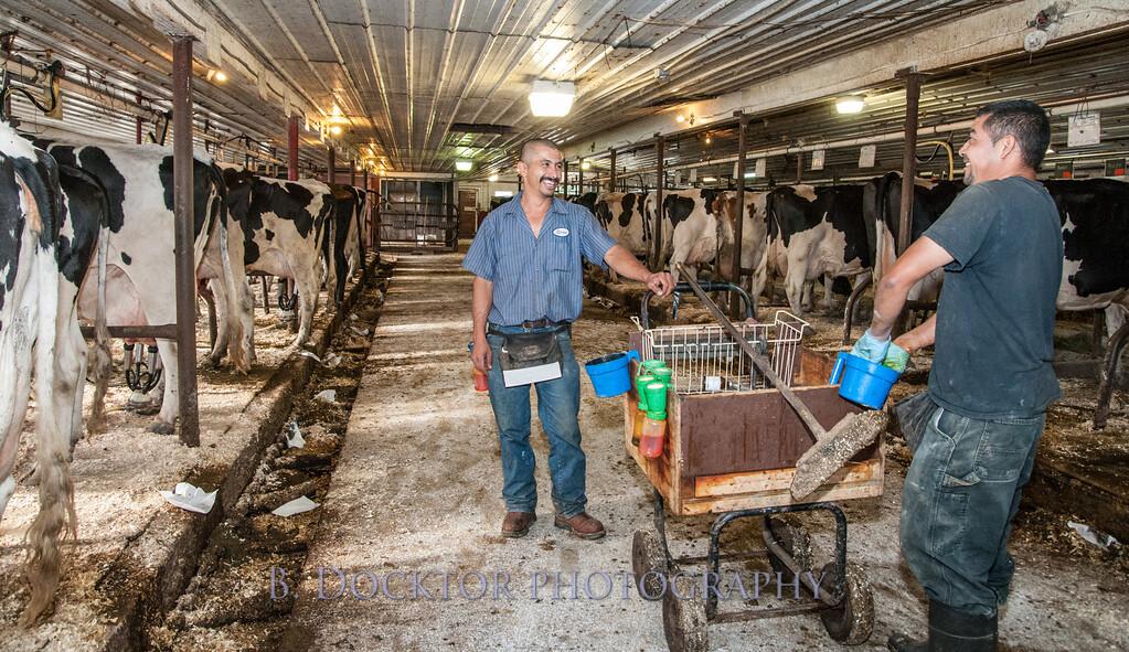 1209_Ronnybrook Farm Milking_019