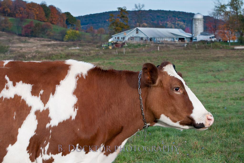 1010_Ronnybrook Farm_074