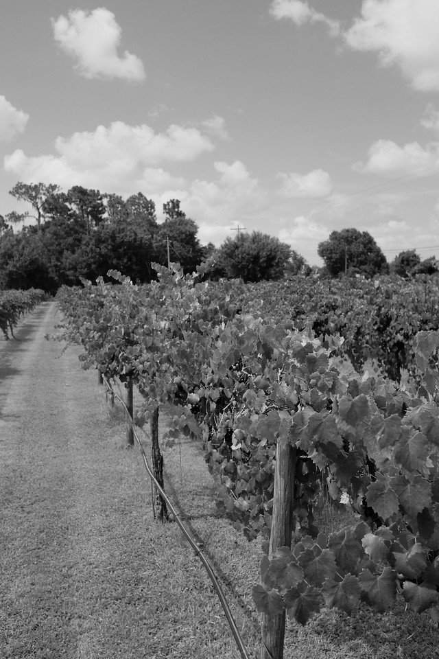 Winery 1 in black and white