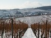 Hunawhir is surrounded by vineyards, as are so many villages in the Alsace.