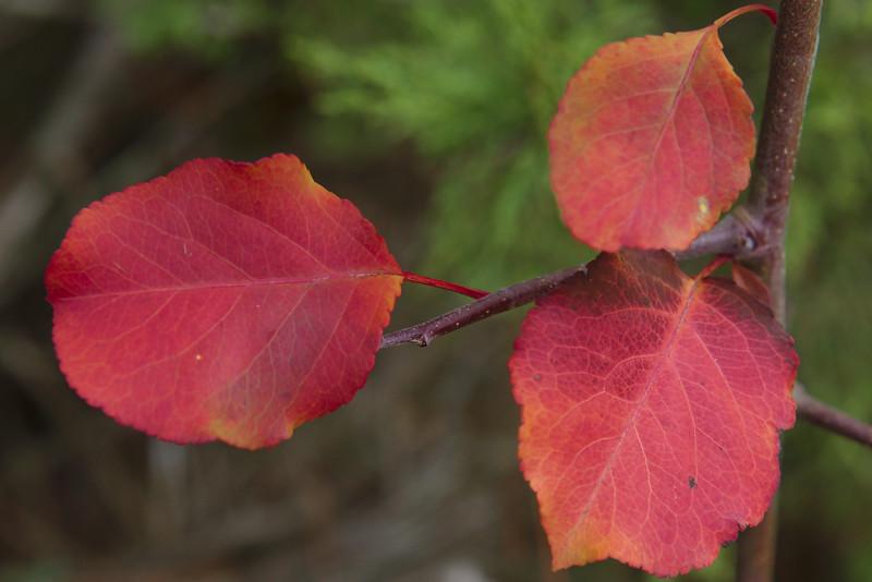 Mid-December foliage