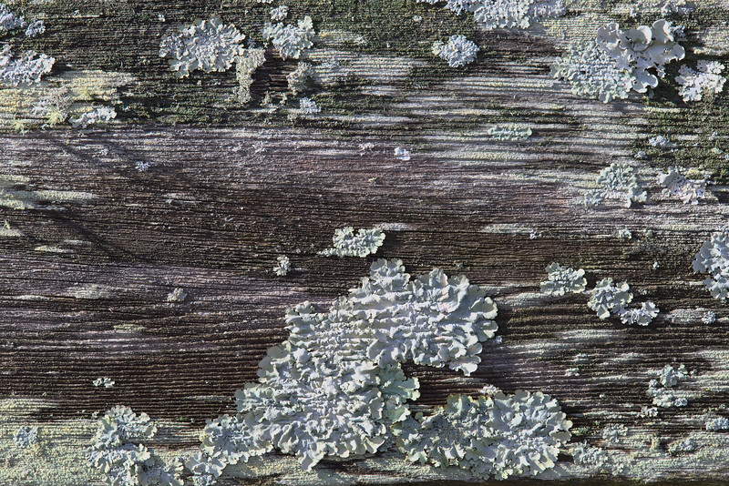 Old fence board #29