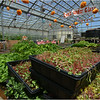 The Food Project's Dudley Greenhouse.