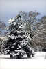 2005 Christmas White Christmas