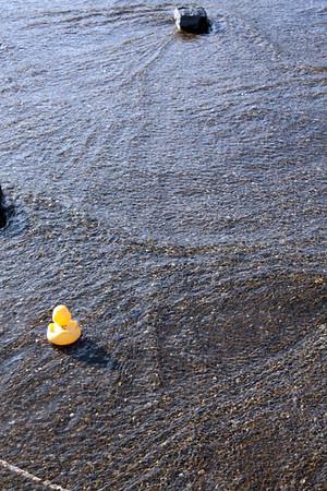 Rubber Duck Regatta