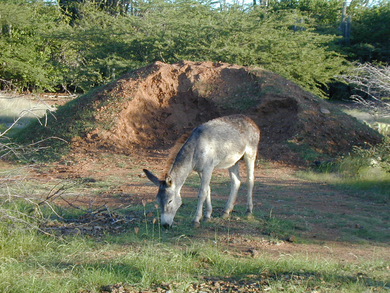 wild donkey in the corral
