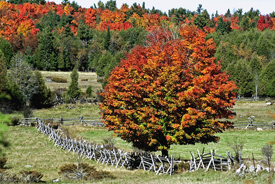 Tree and Fence in Autumn