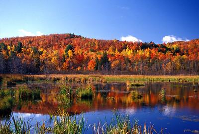 Gatineau Park Fall Colours