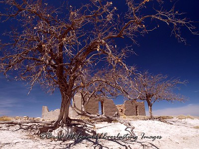 """""""Once Upon A Time""""  Near Encino, NM"""