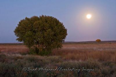 """Moonrise Between Trees""-Brantley Lake Area-Carlsbad, Eddy County, New Mexico"