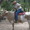 Texas Bull Rider